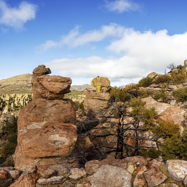 """""""Panoramic View of Massai Point"""" stock image"""