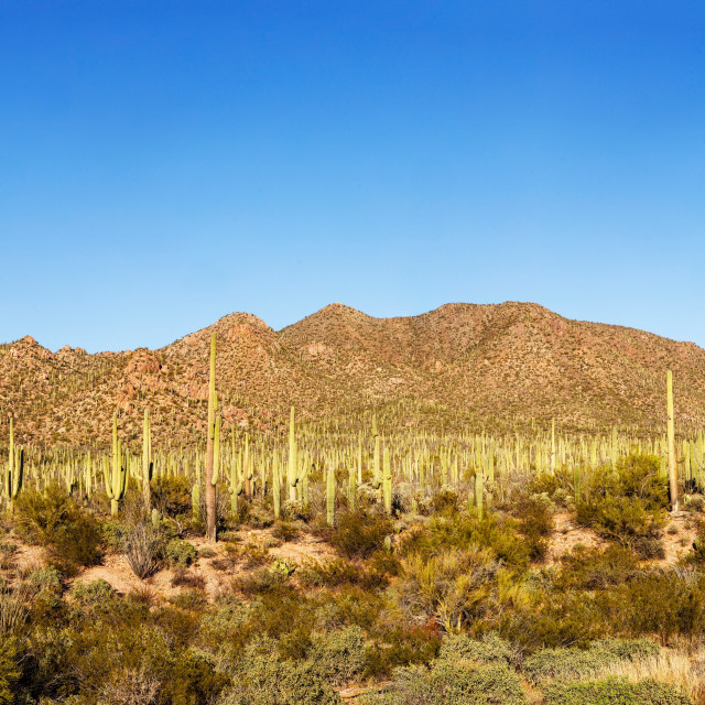 """""""Panoramic View by the Saguaro National Park West Visitor Center"""" stock image"""