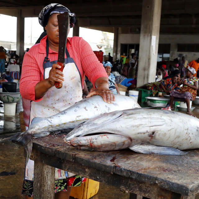 """Port of Lome. Fish market. Tuna fish. Togo."" stock image"