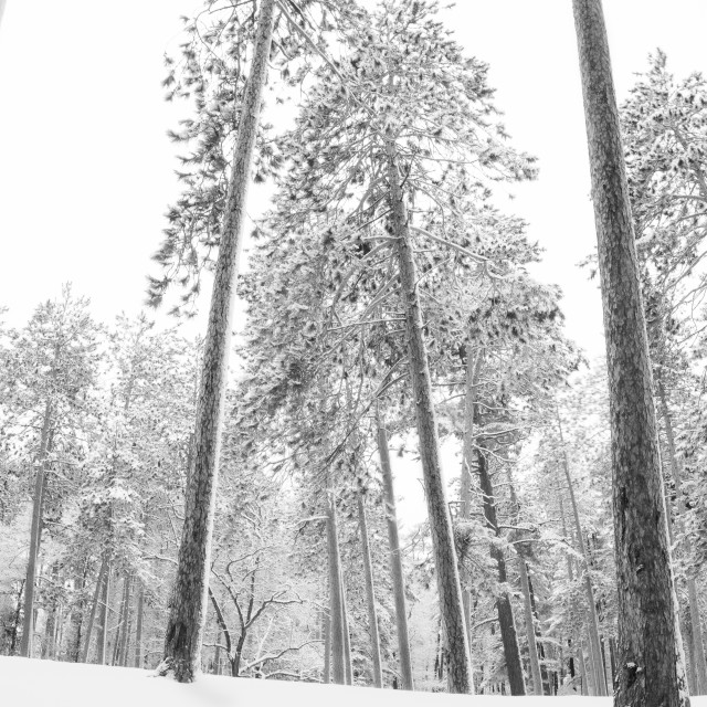 """Heart of Winter"" stock image"