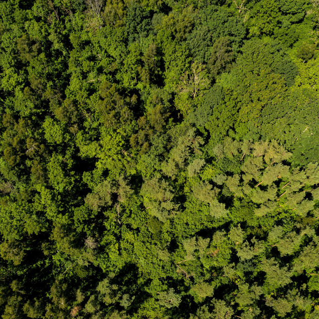 """""""aerial shot of forest"""" stock image"""
