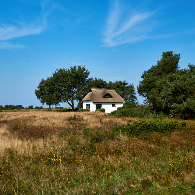 """rural reed house on isle of Hiddensee"" stock image"