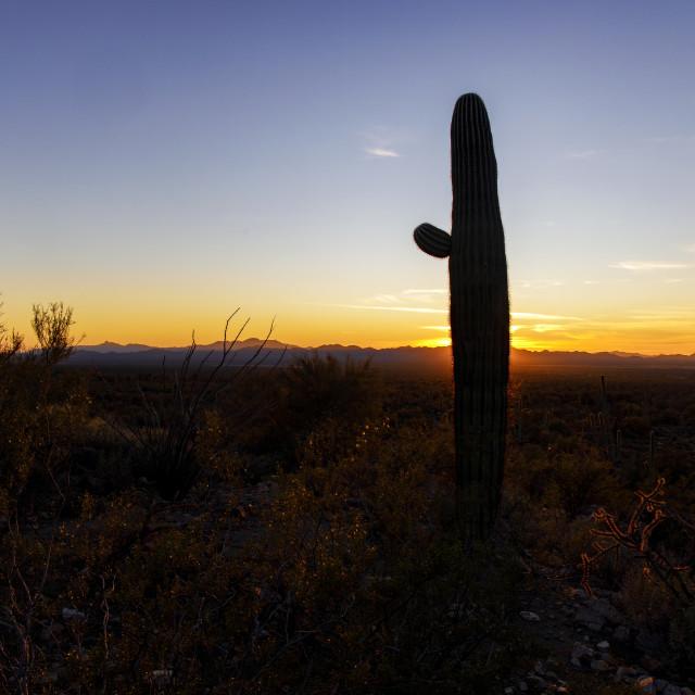 """Saguaro Cactus Waving Good Night To the Setting Sun"" stock image"