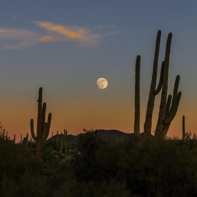 """Moon Rising Over Saguaro National Park"" stock image"
