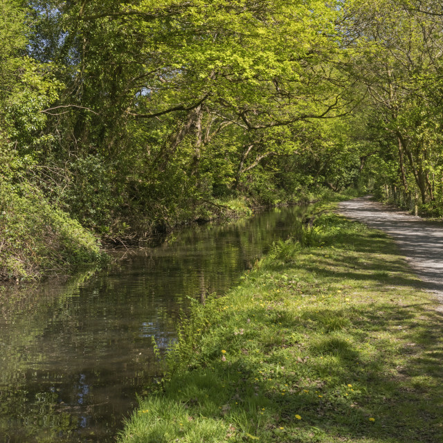 """Swansea Canal between Clydach and Pontardawe, South Wales, UK"" stock image"