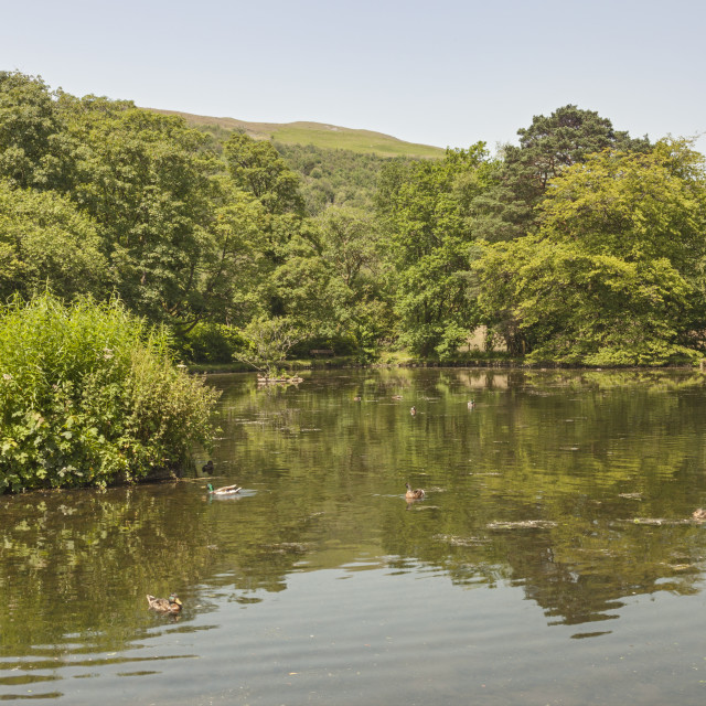 """The Fishpond, Craig-y-Nos Country Park, Pen-y-cae, Brecon Beacons National Park, Powys, South Wales, UK"" stock image"