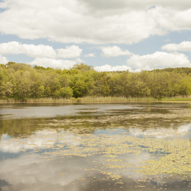 """Lower Lake, Penllergare Valley Woods, Penllergaer, Swansea, South Wales, UK"" stock image"