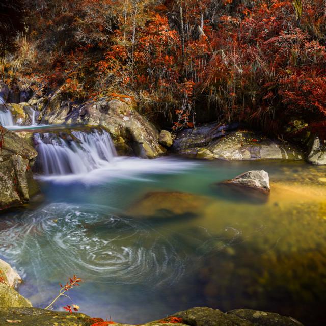 """Rapaura Watergardens, Coromandel"" stock image"