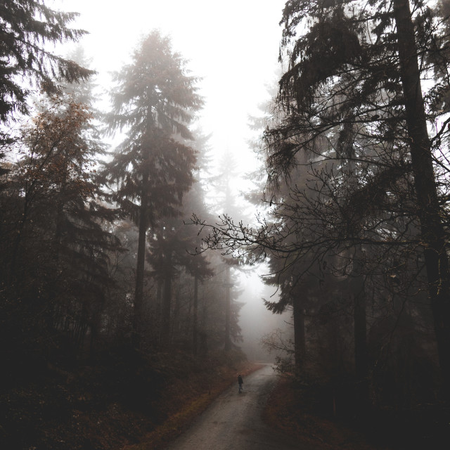 """""""Fog at Wyre Forest"""" stock image"""