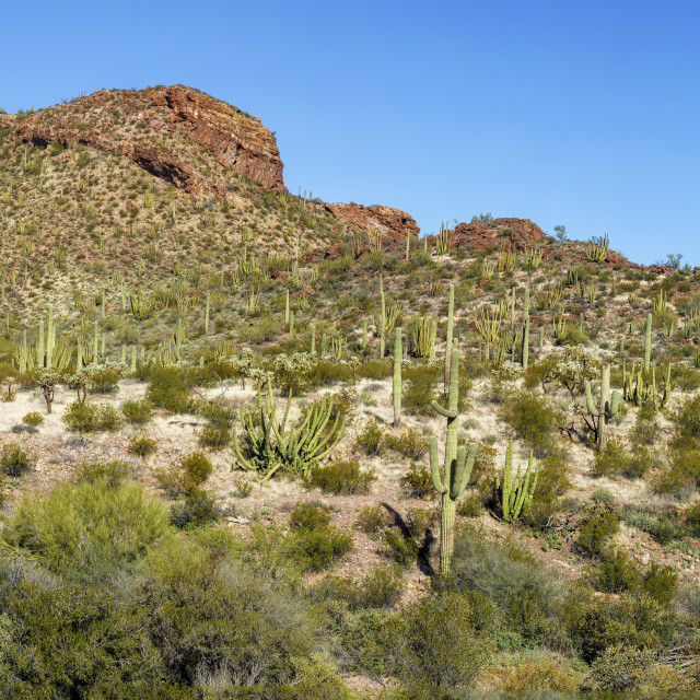 """""""Panorama of the Mountains of Organ Pipe Cactus National Monument"""" stock image"""