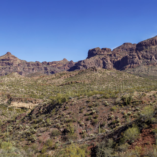 """Ajo Mountain Range - Organ Pipe Cactus National Monument"" stock image"