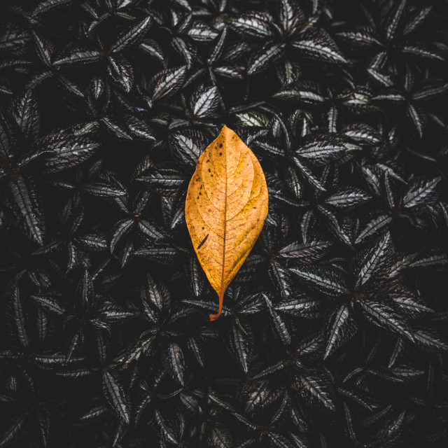 """""""The Leaf"""" stock image"""