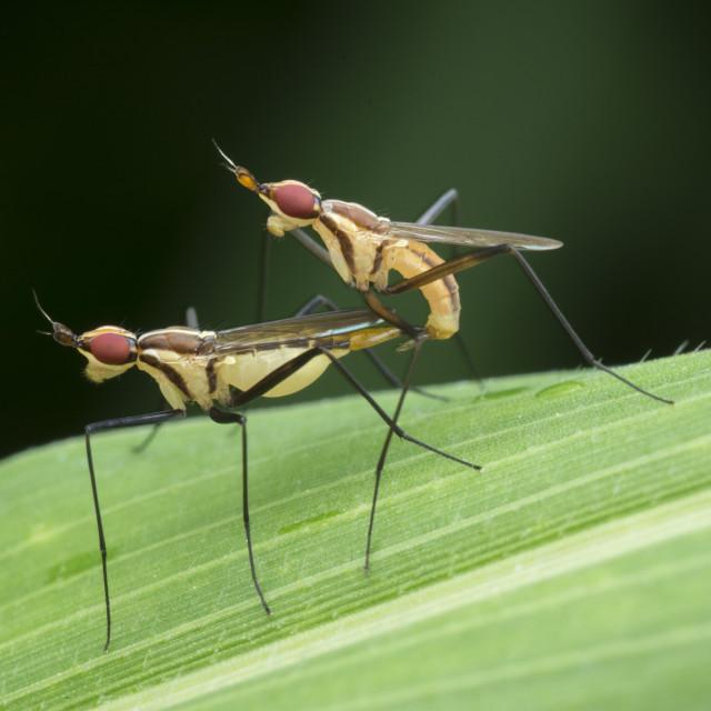"""stalk fly"" stock image"