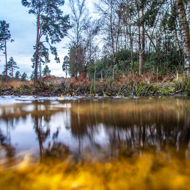 """""""View across water and under water to forest scene"""" stock image"""