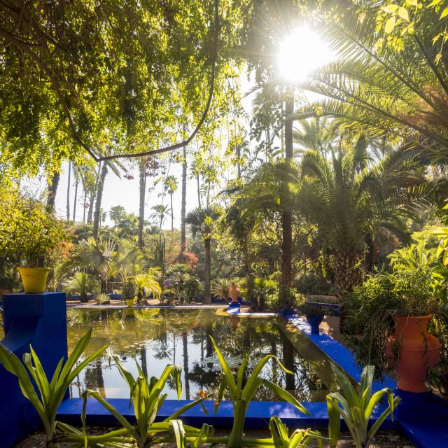 """Jardin Majorelle, Majorelle garden.Water lily pool"" stock image"