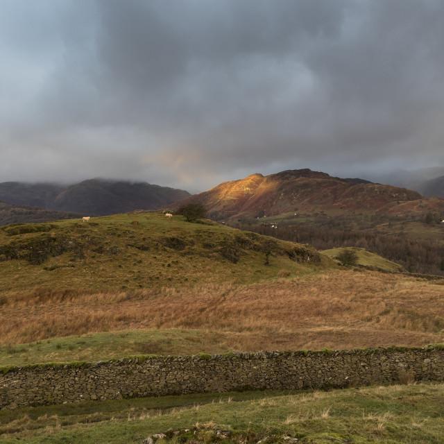 """Lingmoor Fell Morning Light, Lake District, Cumbria"" stock image"