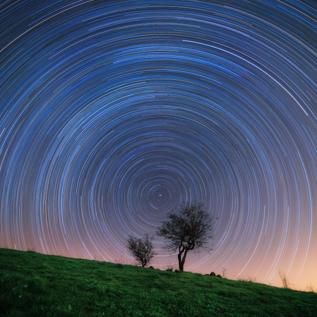 """star trail behind a tree"" stock image"