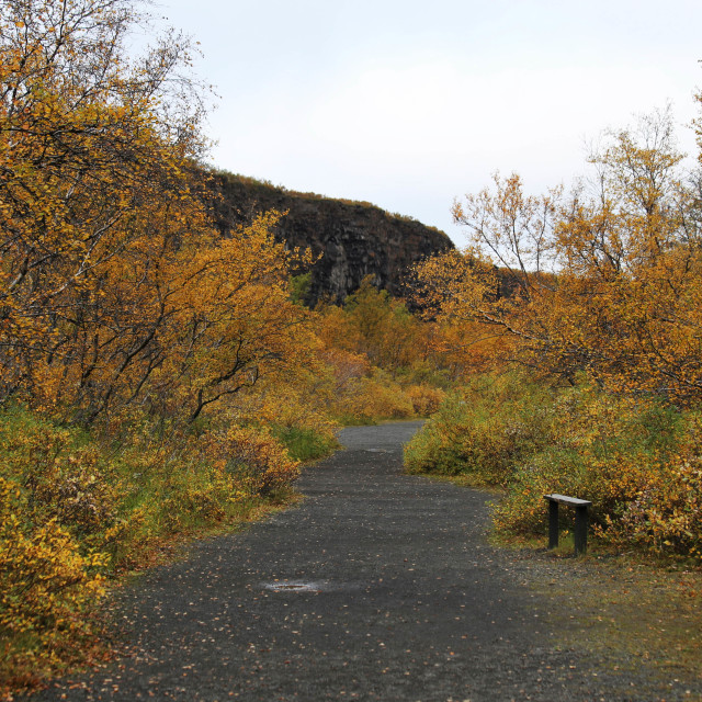 """Bench on a Trail in Asbyrgi Iceland"" stock image"