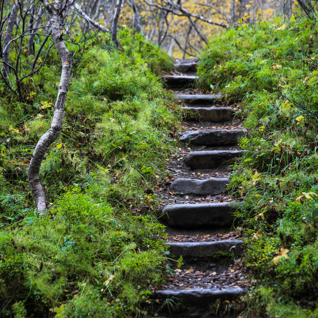 """""""Stone Staircase in Asbyrgi Iceland"""" stock image"""