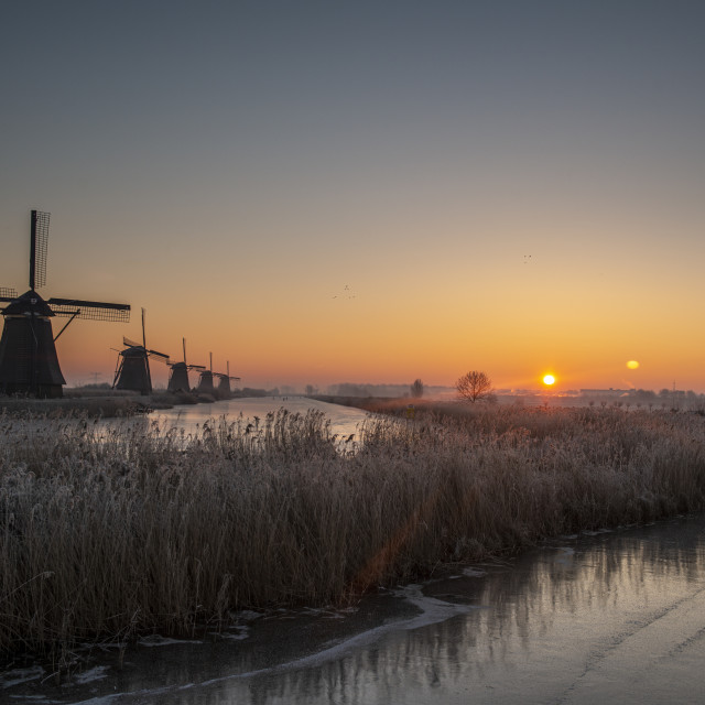 """Kinderdijk Windmills"" stock image"