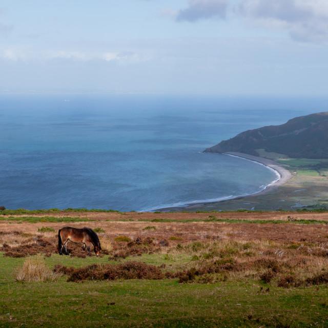 """""""Exmoor Ponies"""" stock image"""
