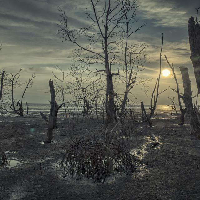 """mangrove swamp"" stock image"