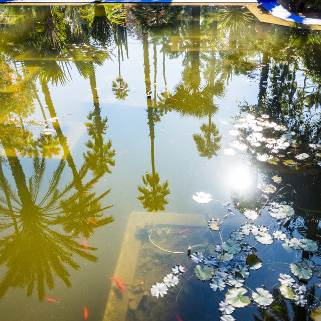 """""""Refelection in pond at Blue House in the Jardin Majorelle"""" stock image"""