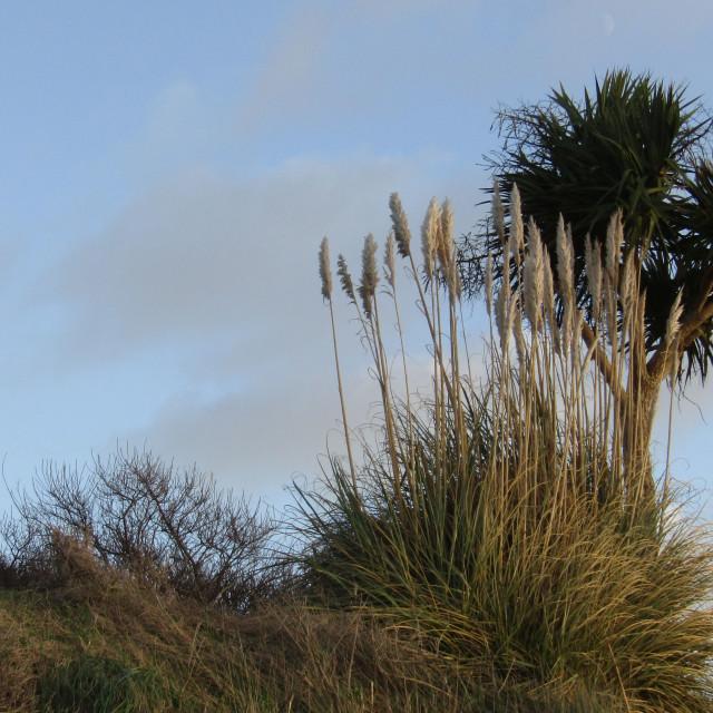 """Burnham-on-Sea beach trees"" stock image"