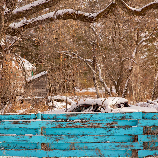 """""""A snow covered abandoned car behind a vibrant aqua painted wood fence that's peeling with overhanging bare trees in a deserted backyard in a winter afternoon landscape"""" stock image"""