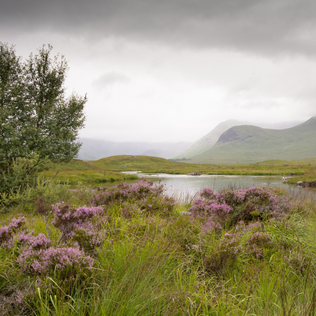 """Rannoch Moor, Scotland. UK"" stock image"