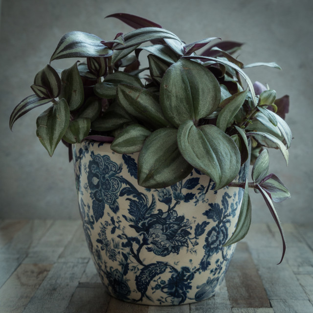 """Pot Plant"" stock image"