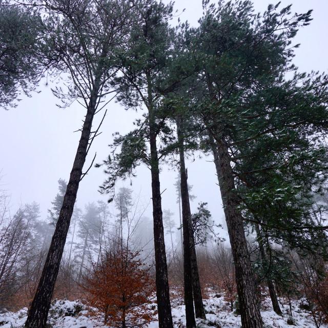 """snow on the mountain in winter season"" stock image"