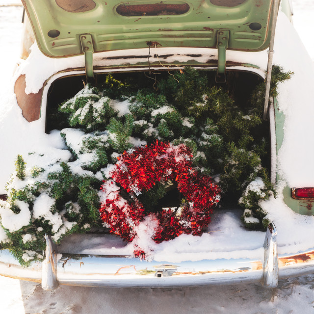 """""""An open trunk of a vintage car with a Christmas tree and red garland in the trunk on display in a winter landscape"""" stock image"""