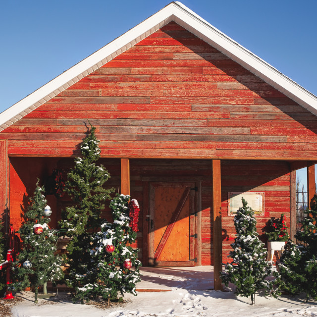 """""""Various sizes of decorated Christmas trees in front of a tall faded red building with an overhanging roof in a winter landscape"""" stock image"""