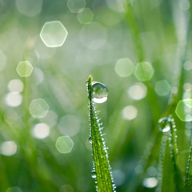 """""""raindrop on the green grass in rainy days, green background"""" stock image"""