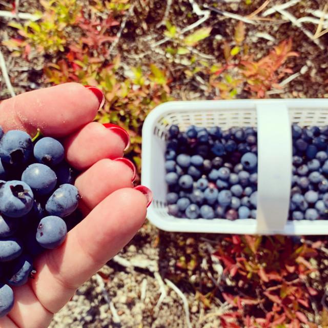 """""""Wild blueberries"""" stock image"""