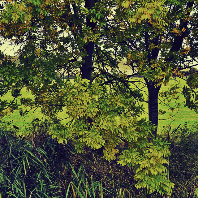 """""""Beautiful Foliage"""" stock image"""