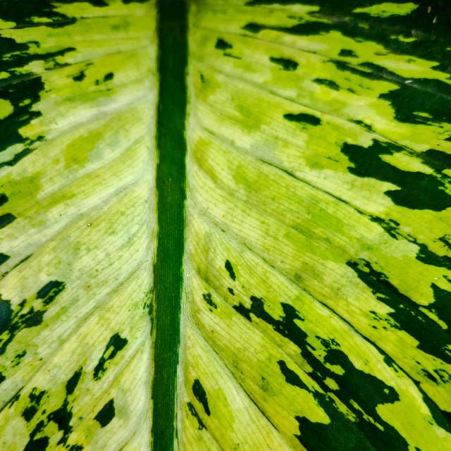 """green leaf textured background for social media"" stock image"