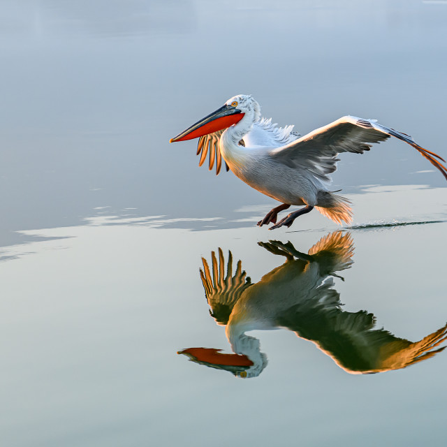 """Landing with reflection"" stock image"