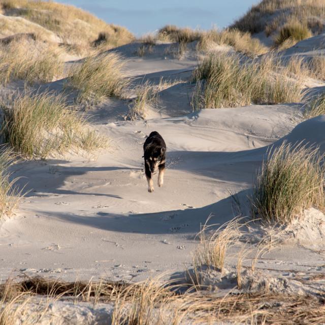 """Dog on a North Sea Beach"" stock image"