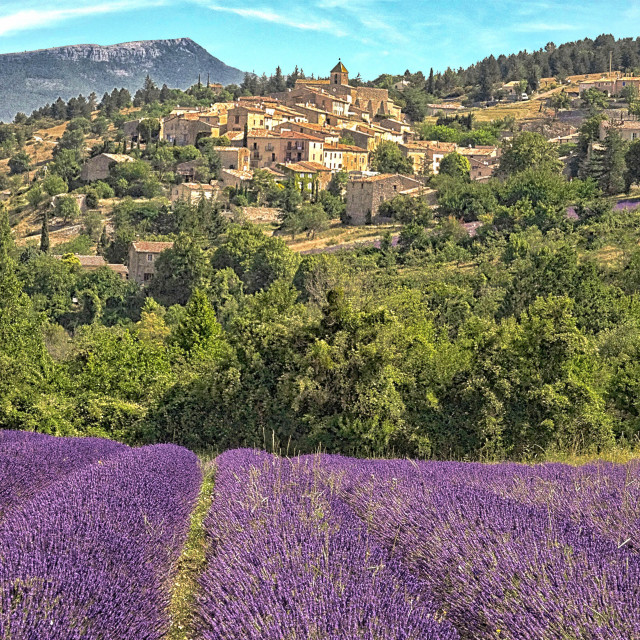 """Village and Lavendar Field"" stock image"
