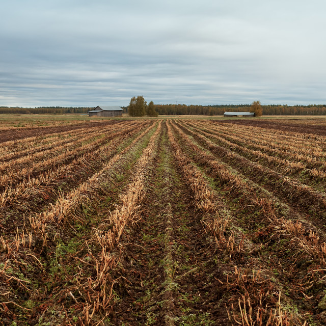 """""""Cloudy Skies Over Autumn Fields"""" stock image"""