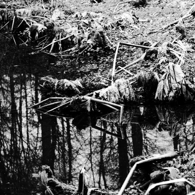 """""Undead Swamp"""" stock image"