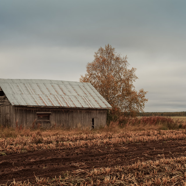"""""""Barn By The Autumn Fields"""" stock image"""