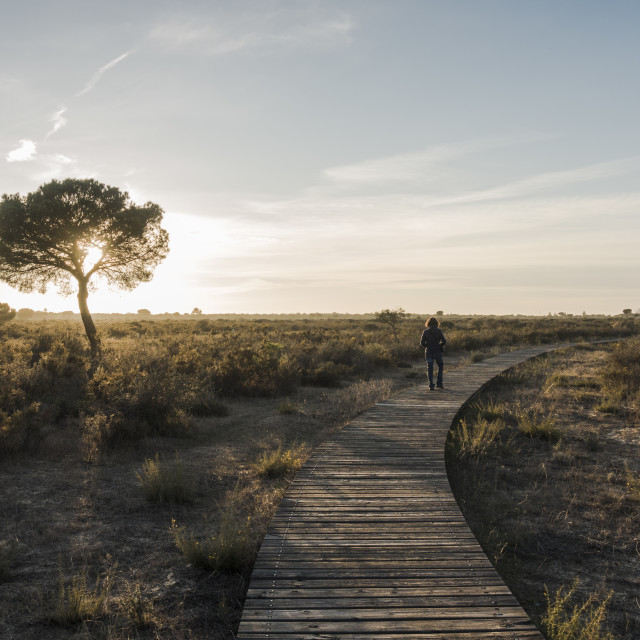 """""""Wooden walkway Coto Doñana National Park, at sunset, Andalucia, Spain"""" stock image"""