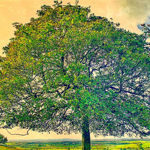 """Sun Kissed Tree"" stock image"