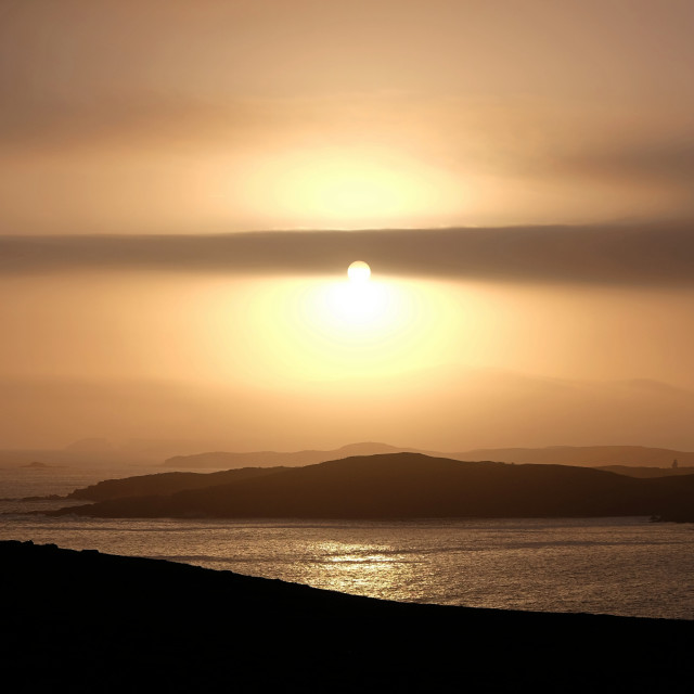 """Bird In The Sunset, Shetland"" stock image"