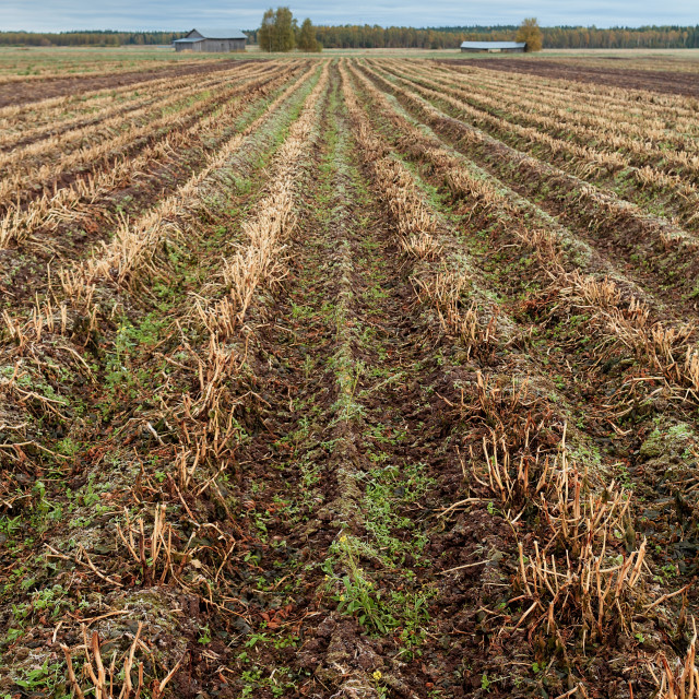 """""""Long Plows of an Autumn Field"""" stock image"""