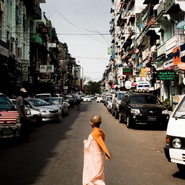 """Young Buddhist Monk"" stock image"