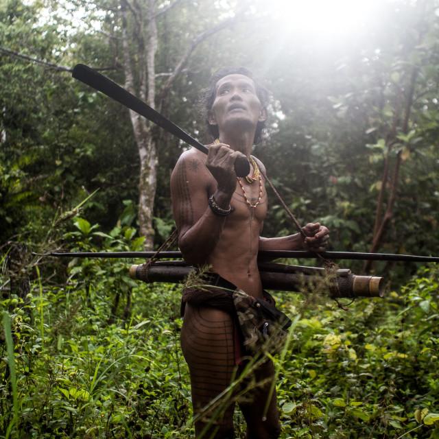 """Listening the jungle"" stock image"